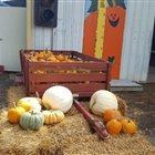 shreves pumpkin patch illinois